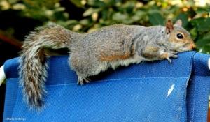 Squirrel IMG_0820©Maria de Bruynres2