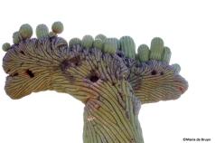 cactus 4©Maria de Bruynres
