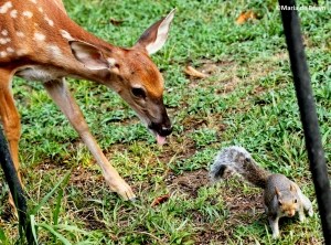 Deer with squirrel IMG_2151©Maria de Bruyn