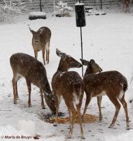 deer bird seed IMG_3127© Maria de Bruyn