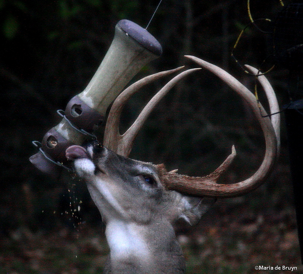 Download How To Make A Homemadedeer Feeder Out Of Wood