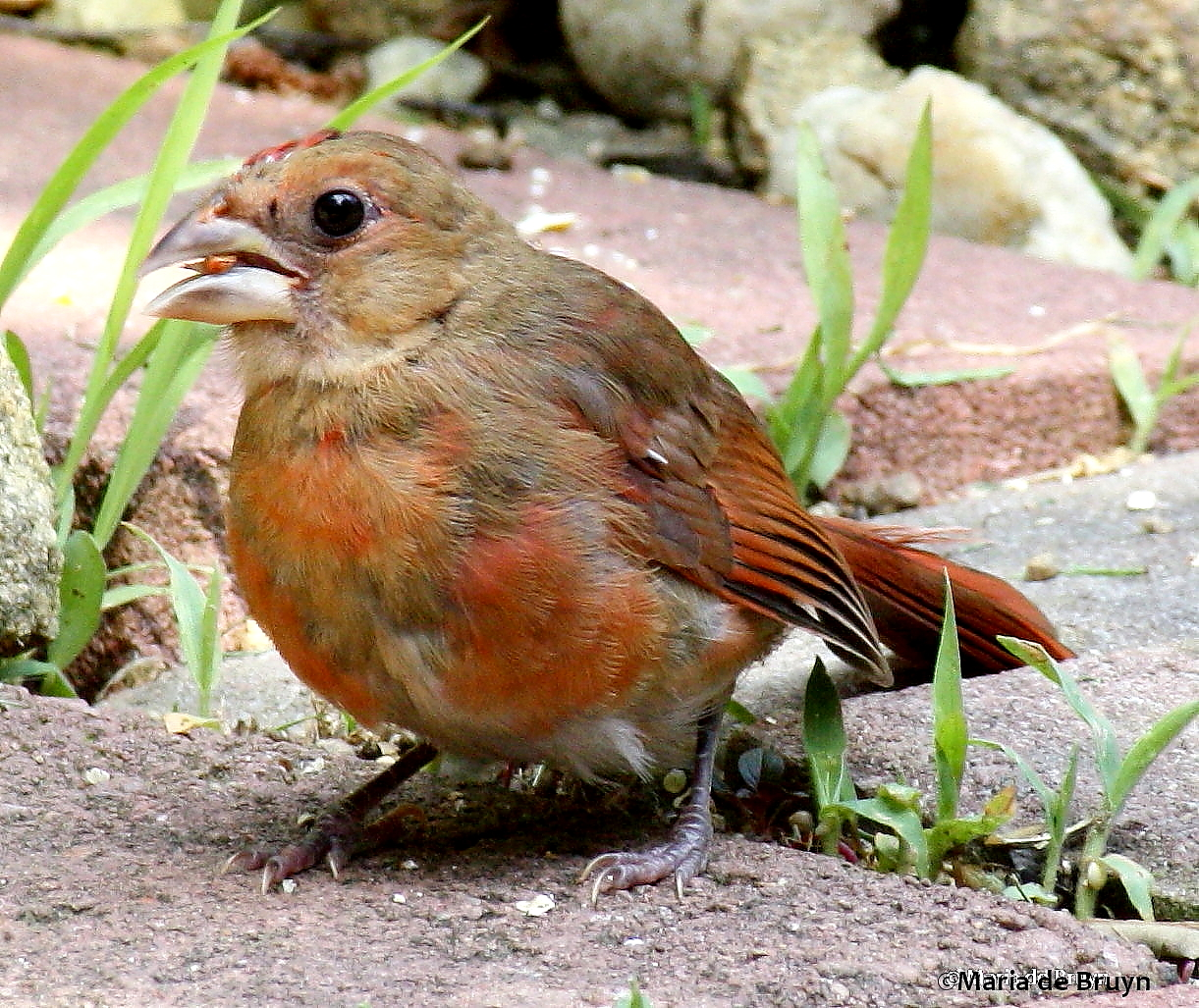 A bird may be known by its song