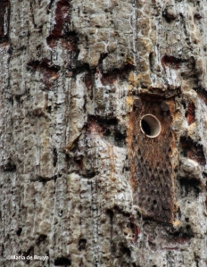 longleaf pine IMG_9040©Maria de Bruyn res