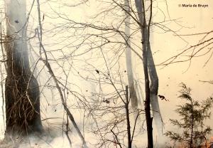 Burn 18 March 2015 DK7A1446© Maria de Bruyn res