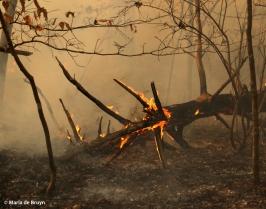 Burn 18 March 2015 DK7A1498© Maria de Bruyn res
