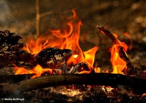 Burn 18 March 2015 DK7A1575© Maria de Bruyn res
