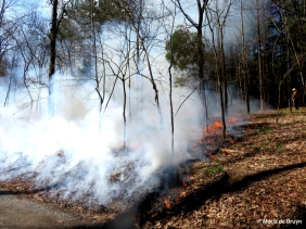 Burn 18 March 2015 IMG_1119© Maria de Bruyn res