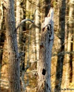 brown-headed nuthatch 2 DK7A5128© Maria de Bruyn