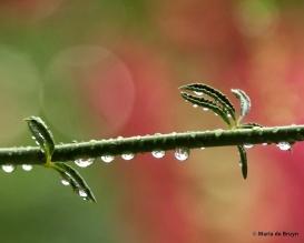 rain drops DK7A8019© Maria de Bruyn res