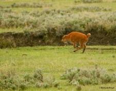 bison I77A1453© Maria de Bruyn res