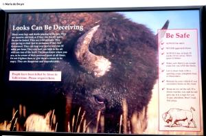 bison IMG_4583© Maria de Bruyn