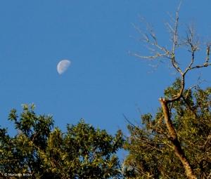 moon I77A9993© Maria de Bruyn res