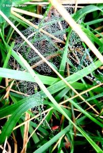 dwarf sheetweb spider IMG_0126© Maria de Bruyn res