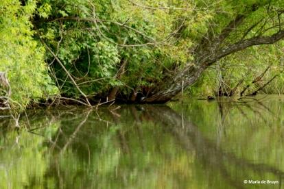 pond I77A6227© Maria de Bruyn res
