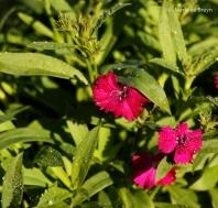 flower-77a1303maria-de-bruyn-res