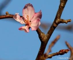flowering-dogwood-i77a0882maria-de-bruyn-res