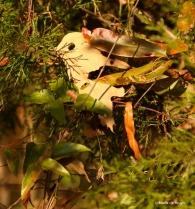 leaf-bird-i77a2906-maria-de-bruyn-res