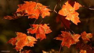 leaf-i77a2875-maria-de-bruyn-res