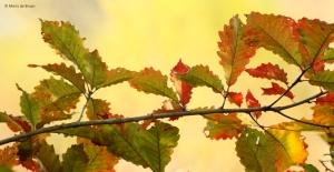 leaves-i77a2882-maria-de-bruyn-res