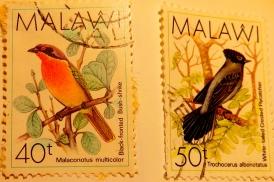 malawi-img_0085-maria-de-bruyn-red