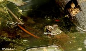bullfrog-i77a9694-maria-de-bruyn-res