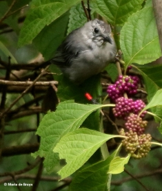 gray-catbird-corey-i77a4763-maria-de-bruyn-res