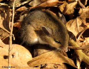 mouse-img_2726-maria-de-bruyn-res