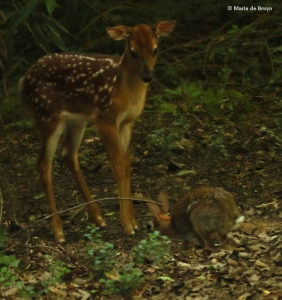 white-tailed-deer-i77a7826-maria-de-bruyn-res