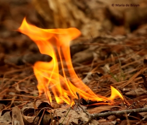 flame-i77a0237-maria-de-bruyn-res