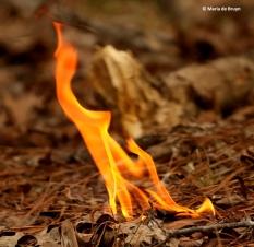 flame-i77a0238-maria-de-bruyn-res