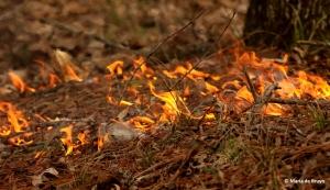 flame-i77a0239-maria-de-bruyn-res