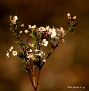 flower-i77a3037maria-de-bruyn-res