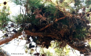 squirrel-nest-i77a9820-maria-de-bruyn-res