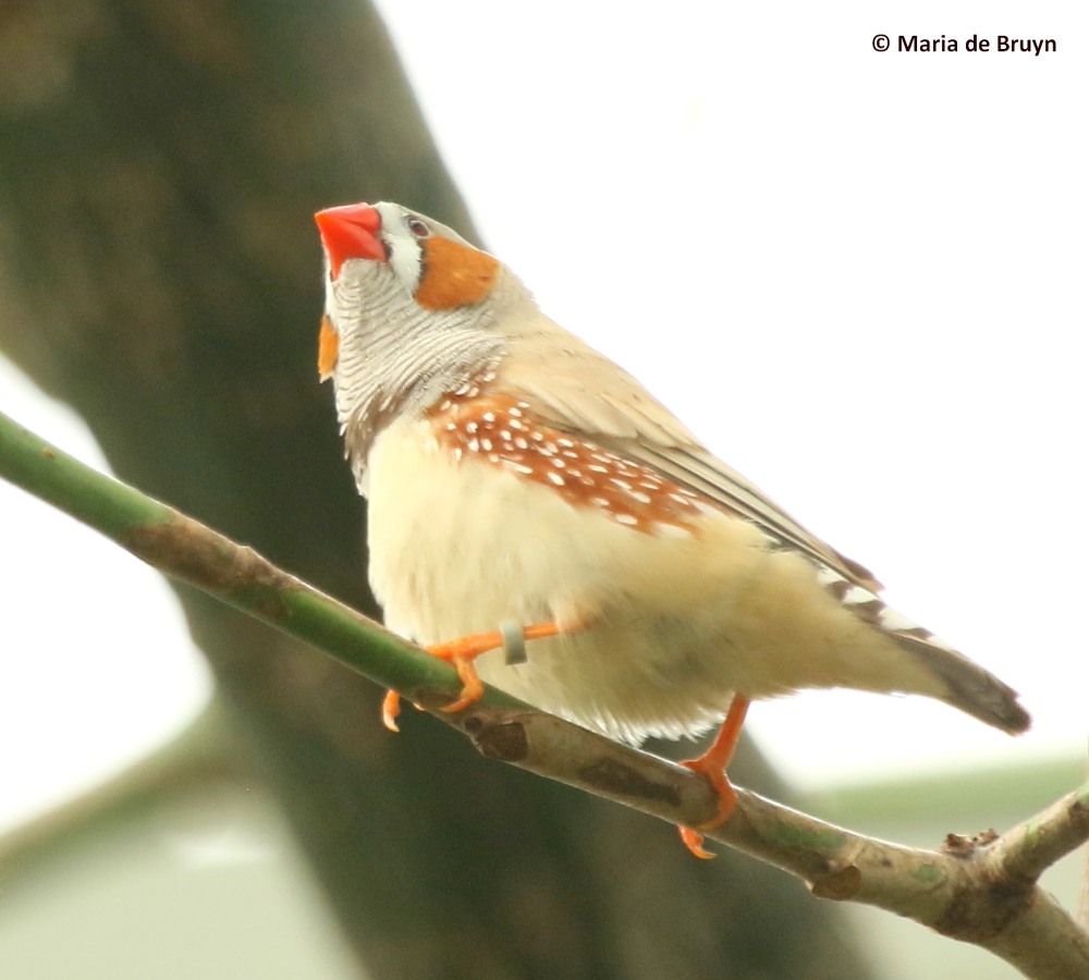 Zebra finch housing behavior my beautiful world for Should i buy a house with polybutylene pipe
