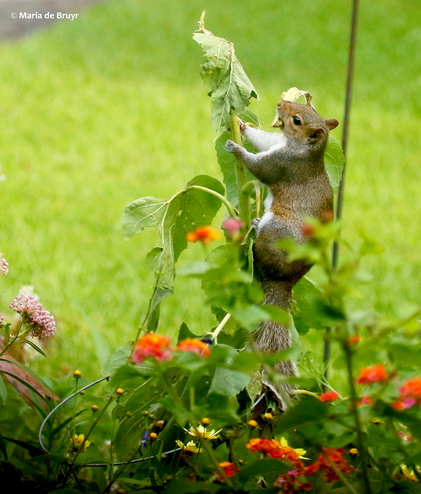 Seed Launching Pad >> My Squirrel Nemesis A Worthy Opponent My Beautiful World
