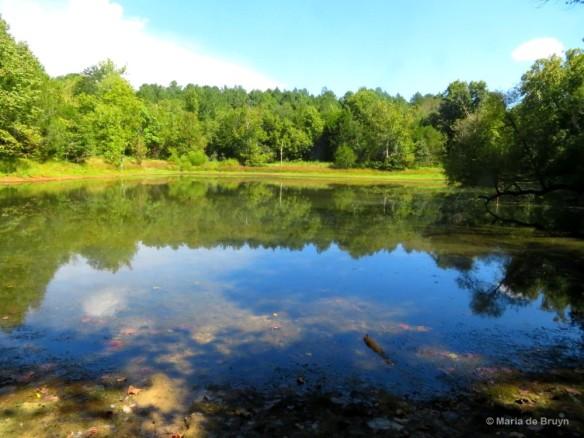 2 Brumley pond IMG_0643 © Maria de Bruyn res